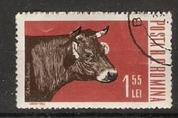 Romania 1962  Farm Animals: Heifer   (o) - Oblitérés