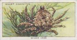 Wills Vintage Cigarette Card The Sea-Shore No 30 Spider Crab  1938 - Wills