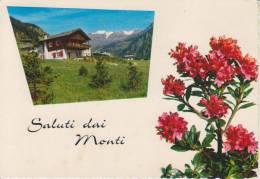 TORINO-SALUTI DAI MONTI-BAITA-RODODENDRO-ANNULLO TORINO FERR. VACCINATE I LATTANTI CONTRO POLIOMELITE-FG-V 11-11-1971 - Unclassified