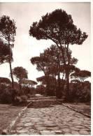 LAZ01 - CASTEL FUSANO: La Pineta E La Strada Severiana - Italia