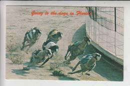 TIERE - HUNDE - Hunderennen - Dog Racing - Courses De Chiens - Corse Di Cani - Hond Racen - Florida/USA - Hunde