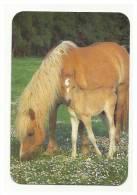 Cavalos / Horses / Portuguese Pocket Calender 2000 - Calendari