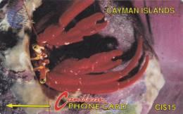 Cayman Islands : CAY-4B . Hermit Crab - New Logo . - Cayman Islands