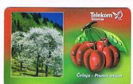 SLOVENIA (SLOVENIJA)  - TELEKOM SLOVENIJE  -  1999 FRUITS: PRUNUS AVIUM  25 IMP. - USED  -  RIF. 3105 - Slovenia