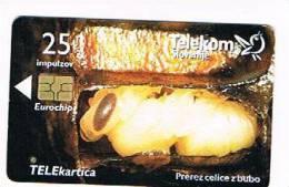 SLOVENIA (SLOVENIJA)  - TELEKOM SLOVENIJE  -  2001 BEES: PREREZ CELICE Z BUBO /  JALOVEC  - USED  -  RIF. 3111 - Slovenia