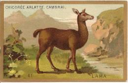 Chromo  Chicorée  Arlatte & Cie  Cambrai  Animaux   Lama   /c4191 - Unclassified