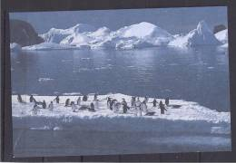 French Antarctica1994: Yvert 2CP Postcard With Penguins - Ganzsachen