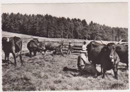 CPSM REGION AUVERGNE  La Traite Des Vaches En Montagne N°264 - Auvergne