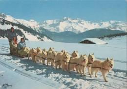 ATTELAGE DE CHIENS SAMOYEDES - Hunde