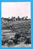 CPSM - BASUTOLAND A La Recherche Du Bois LESOTHO Afrique - Lesotho