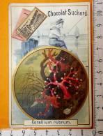 Chromo  Fin 19°/ Chcocolat Suchard / Corallium Rubrum / Corail / Enfant Pêcheur Bateau Voilier - Suchard