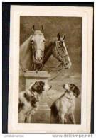 CHEVAUX ET CHIENS - Pferde
