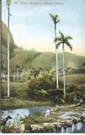 CUBA - CUBAN LANDSCAPE - Cuba