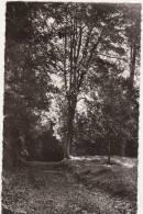 CPSM 95 LOUVRES Sous Bois Dans Le Parc Du Centre S.N.C.F. 1963 - Saint-Avertin