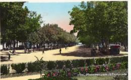 34  MONTPELLIER  L'ESPLANADE - Montpellier