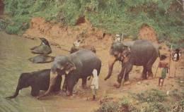 ELEPHANTS BATHING - Sri Lanka (Ceylon)