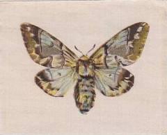 R J Lea Golden Knight Vintage Silk Cigarette Card Butterflies The Kentish Glory - Cigarette Cards