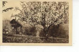 A Identifier Verger Et Maison Oblitération Fribourg 1927 - Cartes Postales