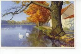 Rivière Et Cygnes Schwanen - Cartes Postales