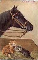 Pferd Mit Zwei Katzen, Künstlerkarte, Sign. A. Müller, 1905 - Pferde