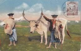 Hongrie - Agriculture - Elevage Taureau Boeuf Cornes - Oblitération Medgyesegyhaza - Hungary