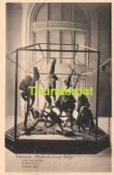 CPA TERVUREN -** TERVUEREN MUSEE DU CONGO BELGE SALLE DE GORILLES GORILLA'S ZAAL - Tervuren