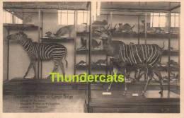 CPA TERVUREN -** TERVUEREN MUSEE DU CONGO BELGE ZEBRES ET ANTILOPES KAAPSCHE EZELEN EN HERTEGEITEN - Tervuren