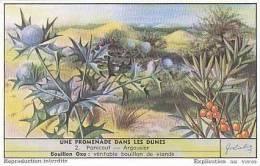 Liebig Vintage Trade Card S1622 Walk In The Sand Dunes No 2 Panicaut-Argousier  1955 - Liebig