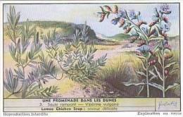 Liebig Vintage Trade Card S1622 Walk In The Sand Dunes No 3 Saule Rampant-Viperine Vulgaire  1955 - Liebig