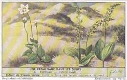 Liebig Vintage Trade Card S1622 Walk In The Sand Dunes No 6 Parnassie-Listera Ovale  1955 - Liebig
