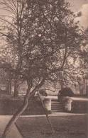 C1920 GLASTONBURY ABBEY - THE HOLY THORN IN ABBEY RUINS - England