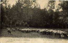 10-Un Pâturage à COURSAN-La Vie Aux Champs En Bourgogne-animée -moutons - Francia