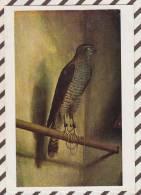 3AC611 NATIONAL GALLERY BARBARI JACOPO    2  SCANS - Peintures & Tableaux