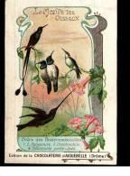 CHROMO Chocolat AIGUEBELLE  -  LE MONDE Des  OISEAUX  -  Ordre Des Passereaux  :colibris, Stéganure, Oréotrochile, - Aiguebelle