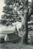 Roly - L'Eglise Et Le Vieux Pin - Philippeville