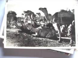 Azië Asia Pakistan With Camels - Pakistan
