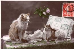 CHAT - Katzen