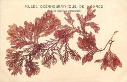 Depts Div- Monaco- Ref G723- Musee Oceanographique De Monaco -algues Maritimes Naturelles  -carte Bon Etat  - - Non Classés