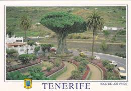 Espagne - Canaries - Ténérife - Vue Du Drago - Tenerife