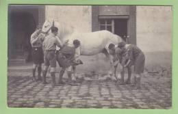 CHAMARANDE, Années 20 : Soins à La Jument Du Château. CARTE PHOTO. Scouts De France. 2 Scans - Scoutisme