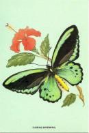 AUSTRALIA MAXICARD CAIRNS BIRDWING BUTTERFLY BUTTERFLIES FLOWER NOT STAMPED ND(1980/81) READ DESCRIPTION !!! - 1980-89 Elizabeth II