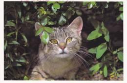 CPM CHAT CHATON TIGRE FEUILLAGE 24 PHOTO BERND SCHELLHAMMER - Gatti