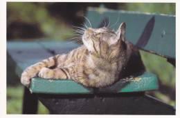 CPM CHAT TIGRE BANC VERT 31  PHOTO BERND SCHELLHAMMER - Gatti