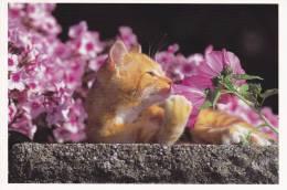CPM CHAT BLANC ROUX FLEUR 32  PHOTO BERND SCHELLHAMMER - Gatti