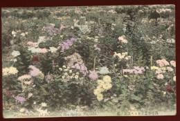 Cpa  Du  Japon Nagasaki  Chrysanthemum Of  Nakashima , Hot Spring   FRVA2 - Japan