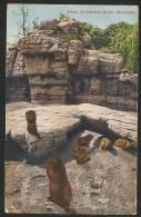 ZOO Basel Murmeltiere Marmottes Stempel Landw. Ausstellung Bern 1925 - Animals