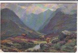 TUCKS OILETTE Postcard CATTLE IN GLENCOE Scotland Tuck - Argyllshire