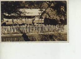 MUJER AFRICANA DEBAJO DE UNA CHOZA LUGAR NO IDENTIFICADO  OHL - Postkaarten