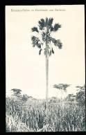 CAMEROUN DIVERS / Borassus Palme / - Cameroun