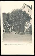 ISLANDE AKUREYRI / Le Sorbier /